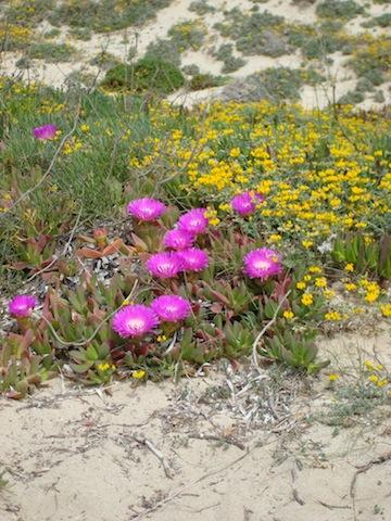 fiori-formentera