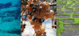 Se Formentera fosse un vino sarebbe un Filò