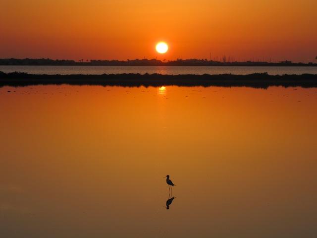 Formentera tramonto con uccello