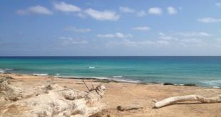 tronchi-spiaggia-formentera