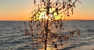 albero formentera